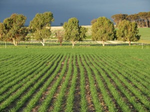 seeding_trees_L