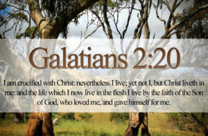bible-1-341